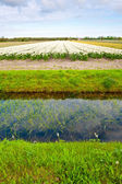 Irrigation Canal — Stock Photo