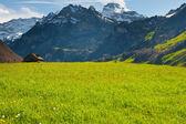 Mattina nelle alpi — Foto Stock
