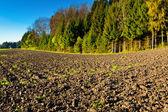 Farmland — Stockfoto