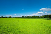 Green Plantation — Stock Photo