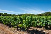 Southern France — Stock Photo