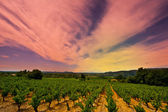 Sunset over Vineyard — Stock Photo