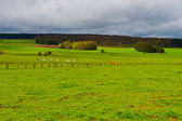 Pasture in the Ardennes — Stock Photo