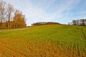 Spring Field — Stock Photo