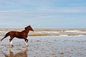 Tančící kůň — Stock fotografie