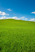 Hills of Tuscany — Stock Photo