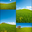 Sloping Meadows — Stockfoto