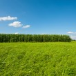 Green Landscape — Stock Photo #21234259