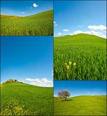 傾斜の牧草地 — ストック写真