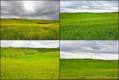Set of Meadows — Stock Photo
