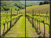 Viñedo italiano — Foto de Stock