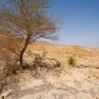 Royalty-Free Stock Photo: Tree in Desert