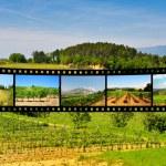 Vineyards — Stock Photo #23273660