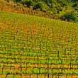Chianti Region — Stock Photo #24978427