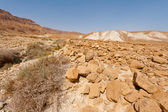 Stone Desert — Stock Photo