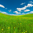 Sky and Meadow — Stock Photo