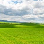 prados de la Toscana — Foto de Stock