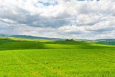 Meadows of Tuscany — Stock Photo