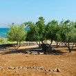Seof Galilee — Stock Photo #29055255