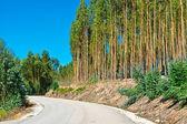 Forest Asphalt Road — Stock Photo