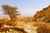 Wüste — Stockfoto