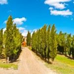 Cypress — Stock Photo #36149265