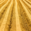 Plowed Field — Stock Photo #37444577