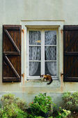 Cat on the Window — Stock Photo