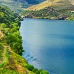 Valley  Douro — Stock Photo #41598645