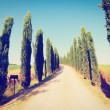 Cypress Alley — Stock Photo #44242375