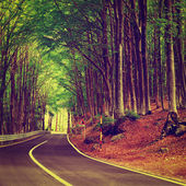 Forest Road — Foto de Stock