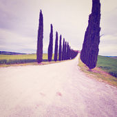 Cypress Alley — Stockfoto