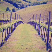 Vineyard — Foto Stock