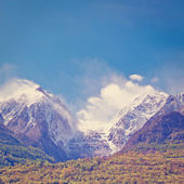 Saint Bernard  — Fotografia Stock