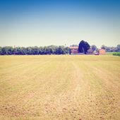 Field — Stock Photo