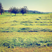 Mown Fields — Stock Photo
