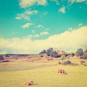 Meadows — Stock Photo