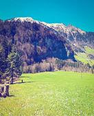 Swiss Alps — Stock Photo