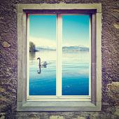 Cisne branco — Fotografia Stock