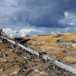 Thundercloud above a dead forest — Stock Photo #30589309
