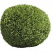 Topiary bush — Stock Photo
