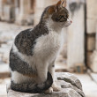 Cat in Ephesus — Stock Photo #35749109