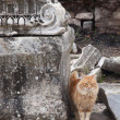 Cat in Ephesus — Stock Photo