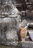 Cat in Ephesus — Stock Photo