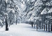 Zimní alej — Stock fotografie