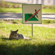 No dogs please — Stock Photo