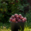 Pail of fresh ripe apples in garden on green grass — Stock Photo