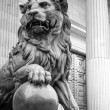 Lion Madrid — Stock Photo