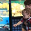 Mother and toddler watching fishes — Stock Photo