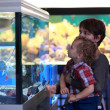 Family at aquarium — Stock Photo